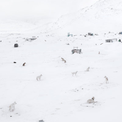 Dogs Sledge , Greenland