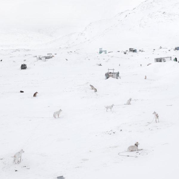 Dogs Sledge , Greenland