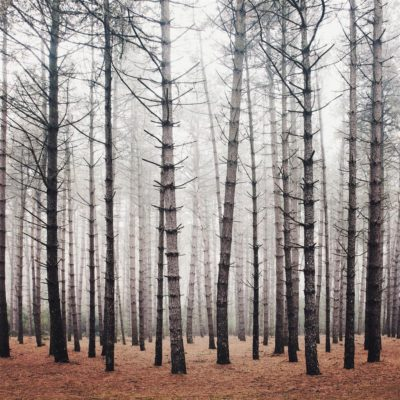Bosland Forest l