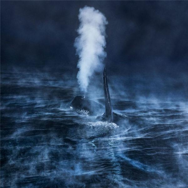 Cold at surface - Audun Rikardsen